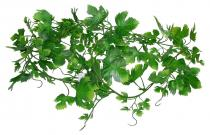 Lucky Reptile Jungle Gape Leaf Vine 200 cm