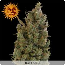Barneys Farm Blue Cheese Feminizované 50 ks